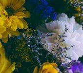 Hypnotherapy | Nancy Bloom | Ashland, OR 97520