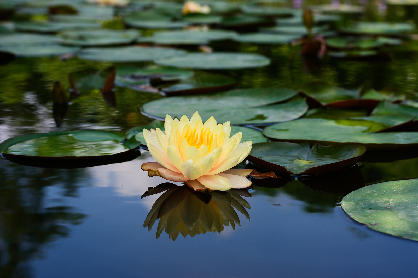 Lotus | Blessing | Helping Your Spirit to Blossom | Ashland, OR 97520