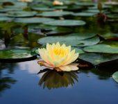 Life Coaching | Nancy Bloom | Ashland, OR 97520