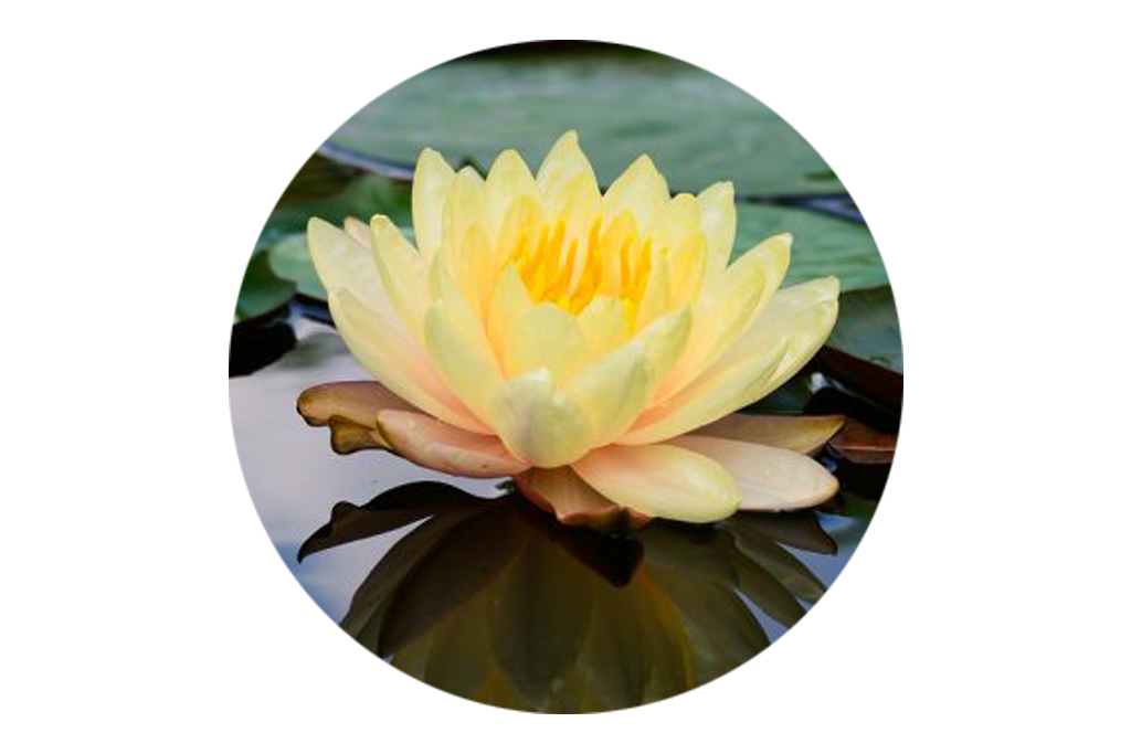 lotus   Testimonials   Nancy Bloom, Life Coach   Ashland, OR 97520